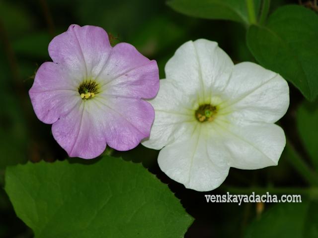 фото цветы в августе