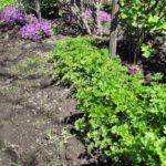 Работы огородника в апреле