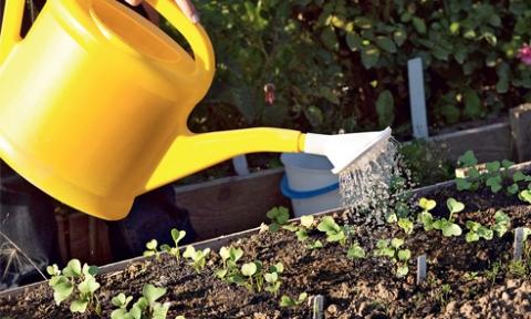 Уход за посевами осеннего редиса
