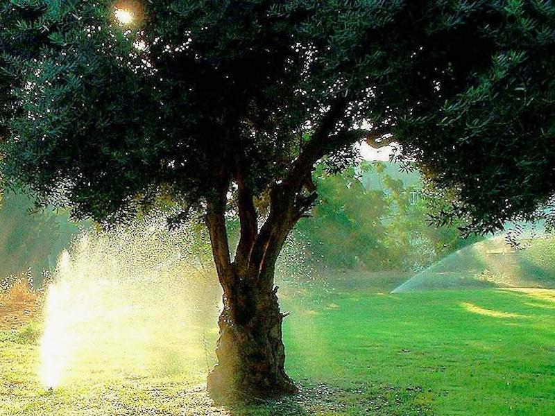 Орошение дерева