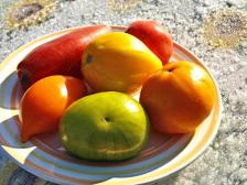 Лучшие сорта долгохранящихся томатов