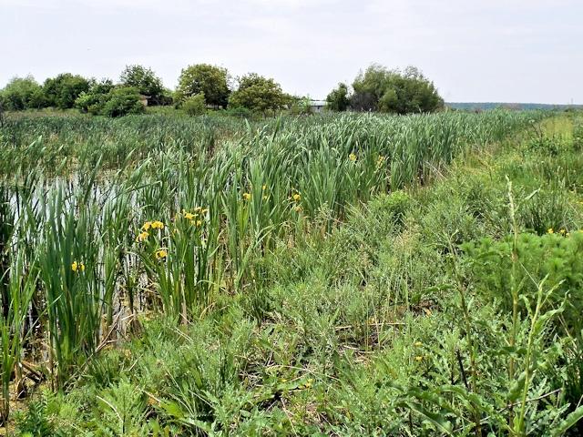 Растения - индикаторы грунтовых вод