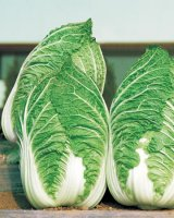 Сорта и гибриды пекинской капусты