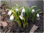 Работы цветовода в марте