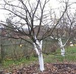 Работы в саду в апреле