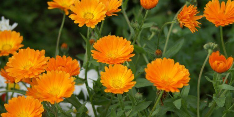 Июнь - какие цветы посадить на даче