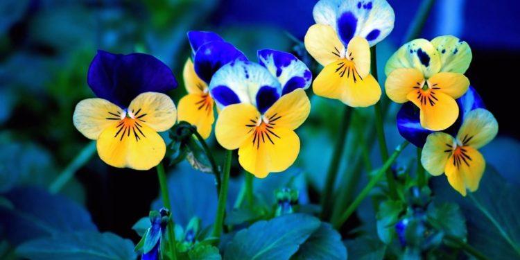 Июль - цветы на даче