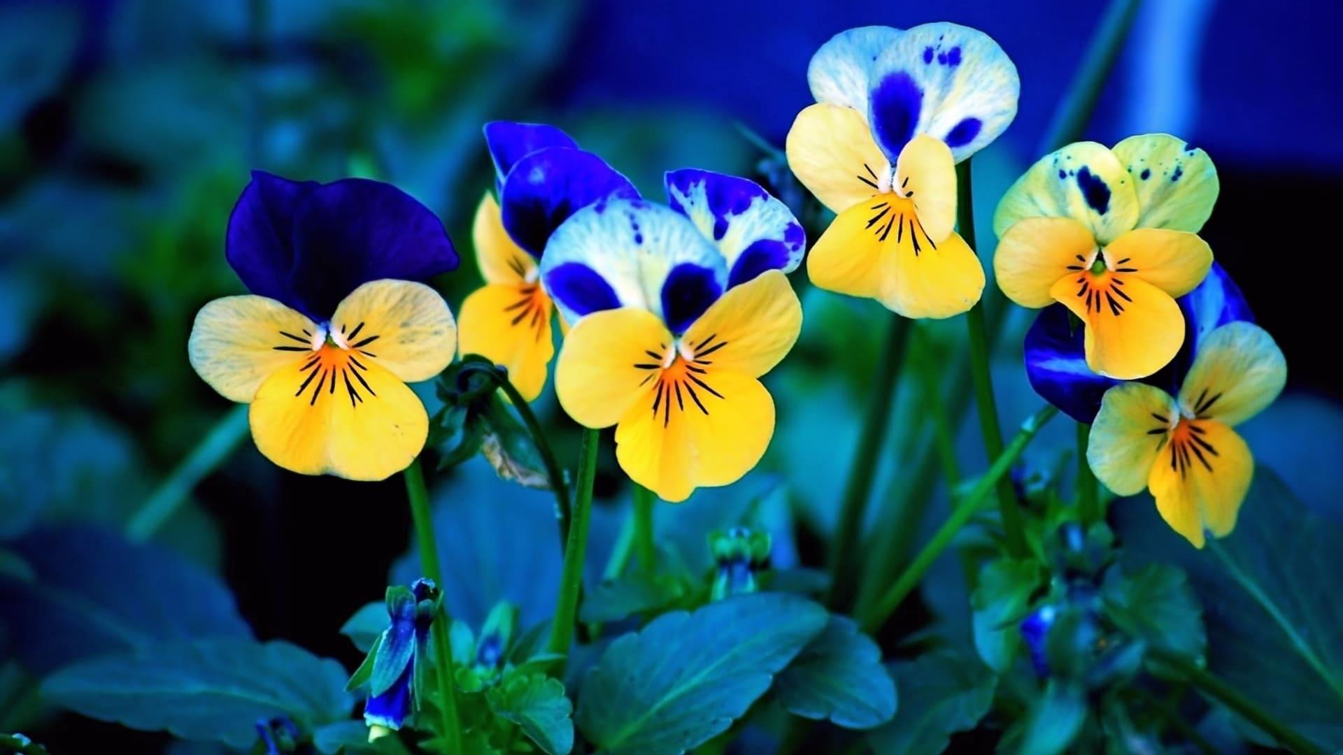 Цветы цветущие в июле