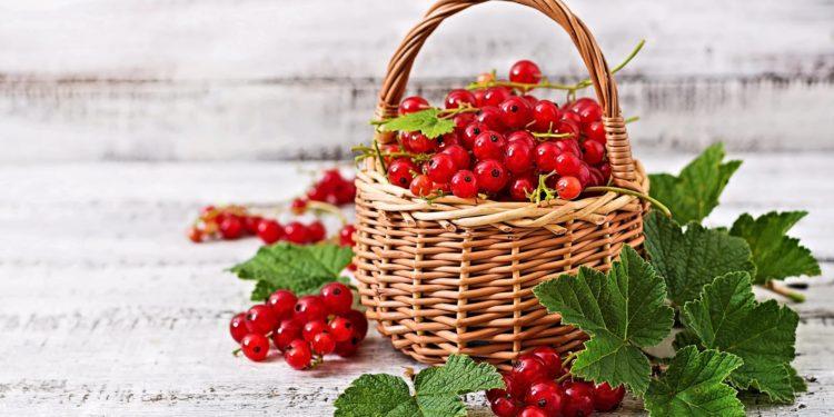 Красная смородина - лечебные свойства