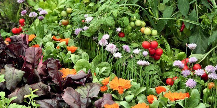 Борьба с вредителями и болезнями овощных культур