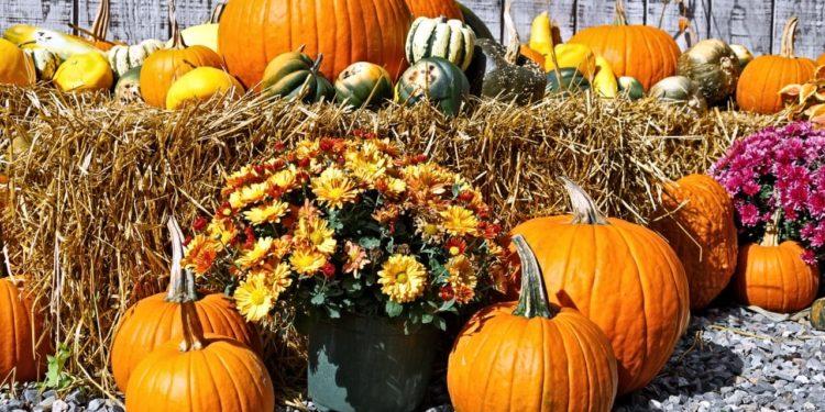 Октябрь - работы в огороде