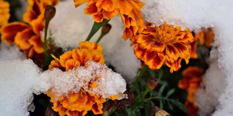 Как подготовить цветник к зиме