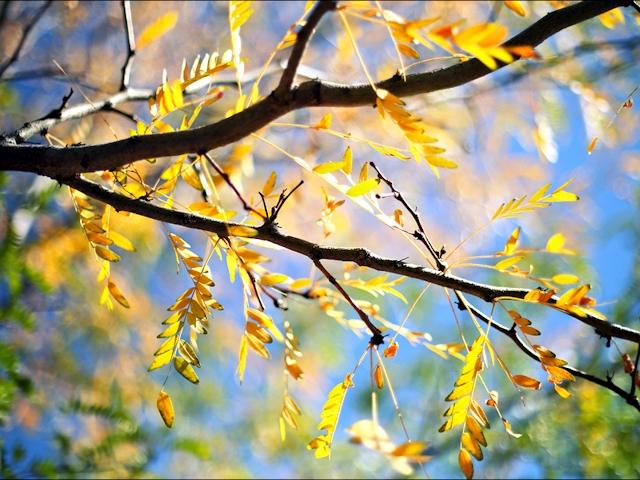 Сад в ноябре