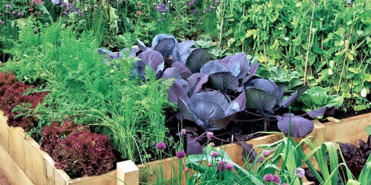 Учитываем самобытность растений