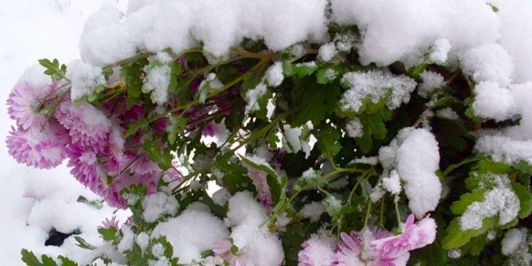 Заботы цветовода в январе