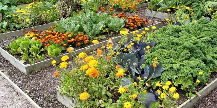 Взаимное влияние растений - аллелопатия