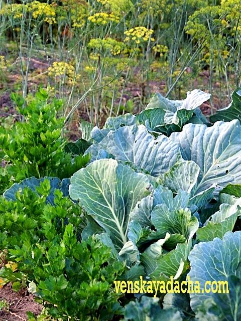 Взаимное влияние растений