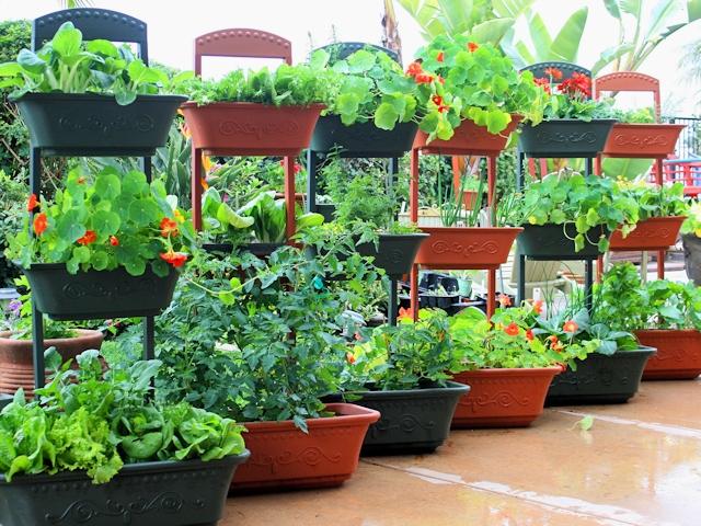 Овощи и цветы в контейнерах