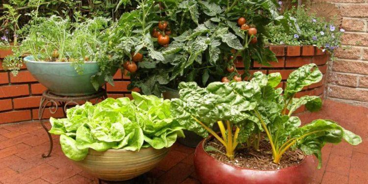 Вырастить совмещенно в контейнерах овощи и цветы