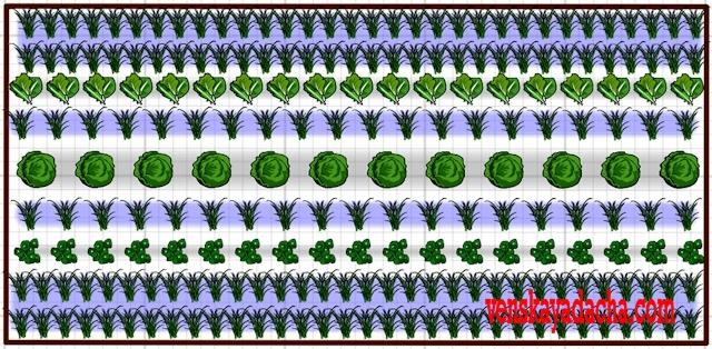 Салат, чеснок под зиму