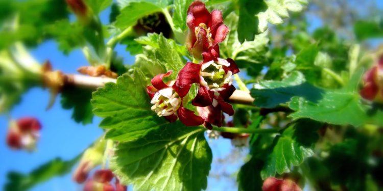 Апрель - ягодники