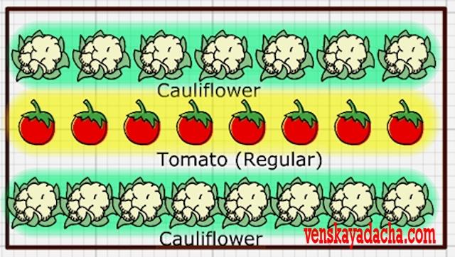 Томаты, цветная капуста