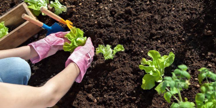Май - работы в огороде