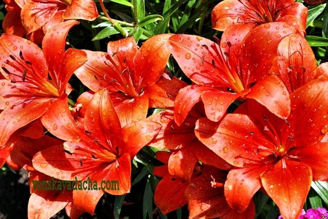Цветник в июне