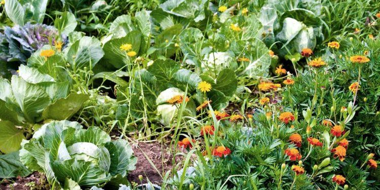 Какие растения защитят от вредителей