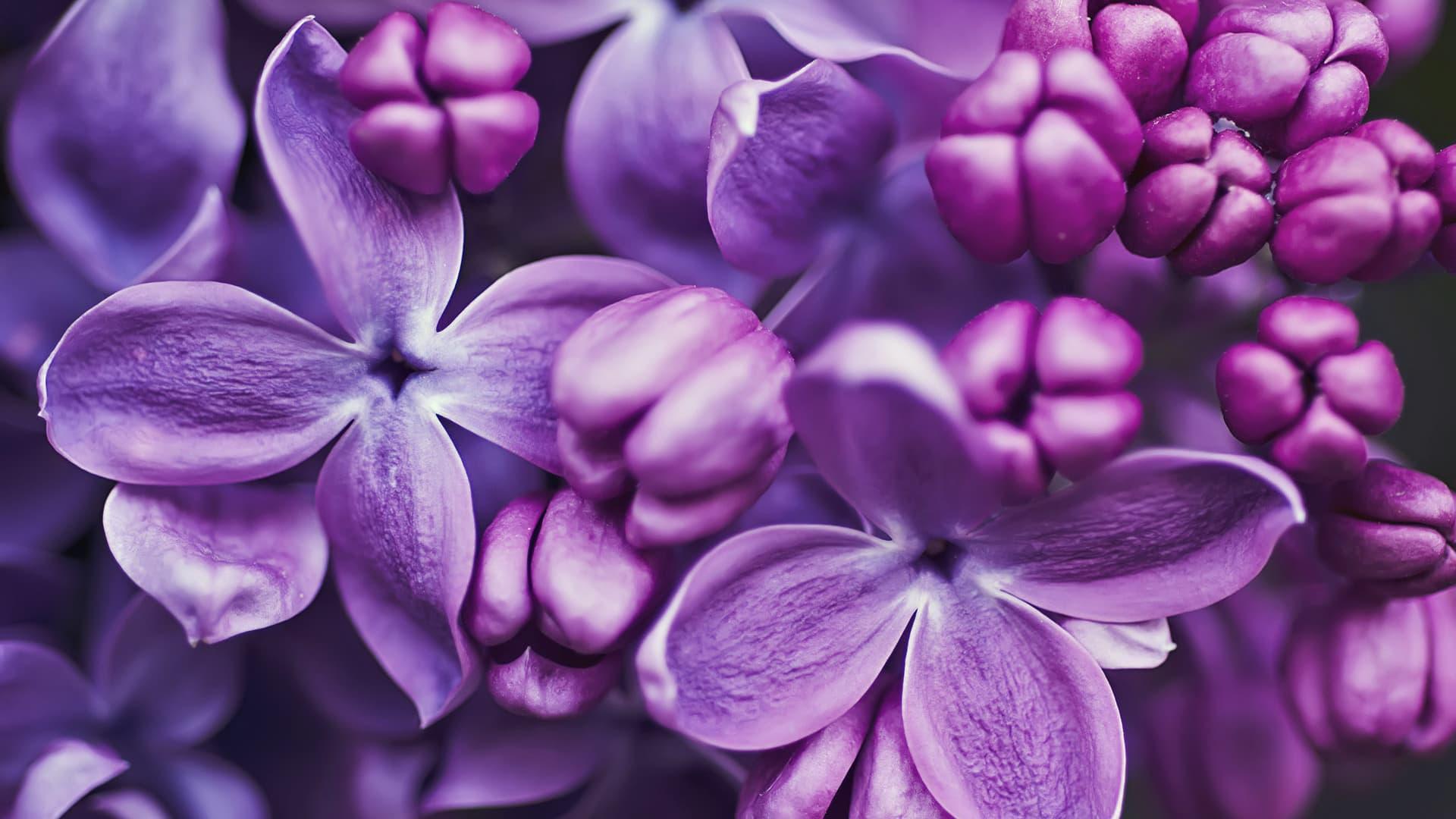 любил был картинки в лиловом цвете фото верху справа должны