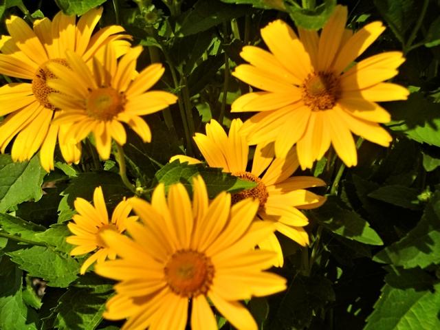 Цветник в июле