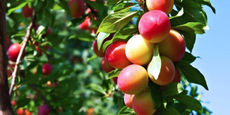 Июль - плодовый сад