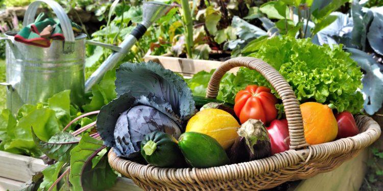 Июль - ранние овощи - урожай