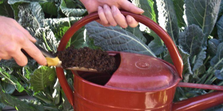 Июль - уход за овощными культурами на даче