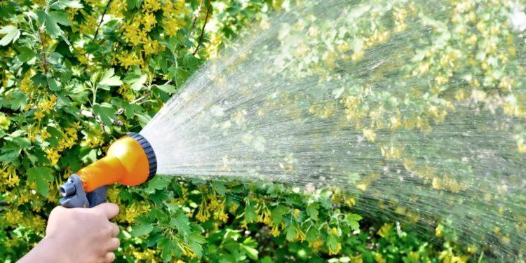 Как поливать сад