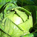 Уборка и хранение кочанной капусты