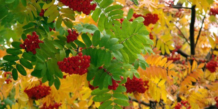 Сентябрь - ягодники на даче