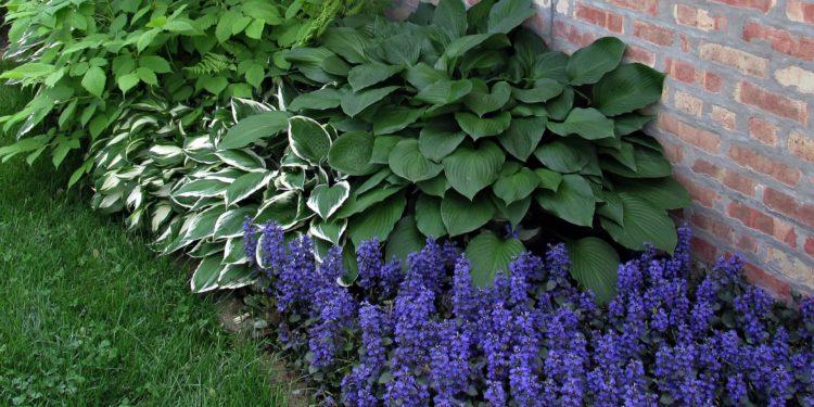 Растения для тенистых мест