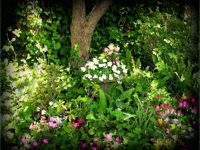 Сад в тени