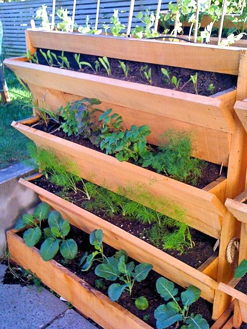 Огород на подоконнике. Создание и оборудование домашнего огорода.