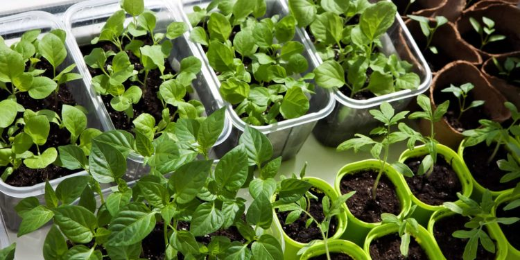 Что сделать для огорода в марте