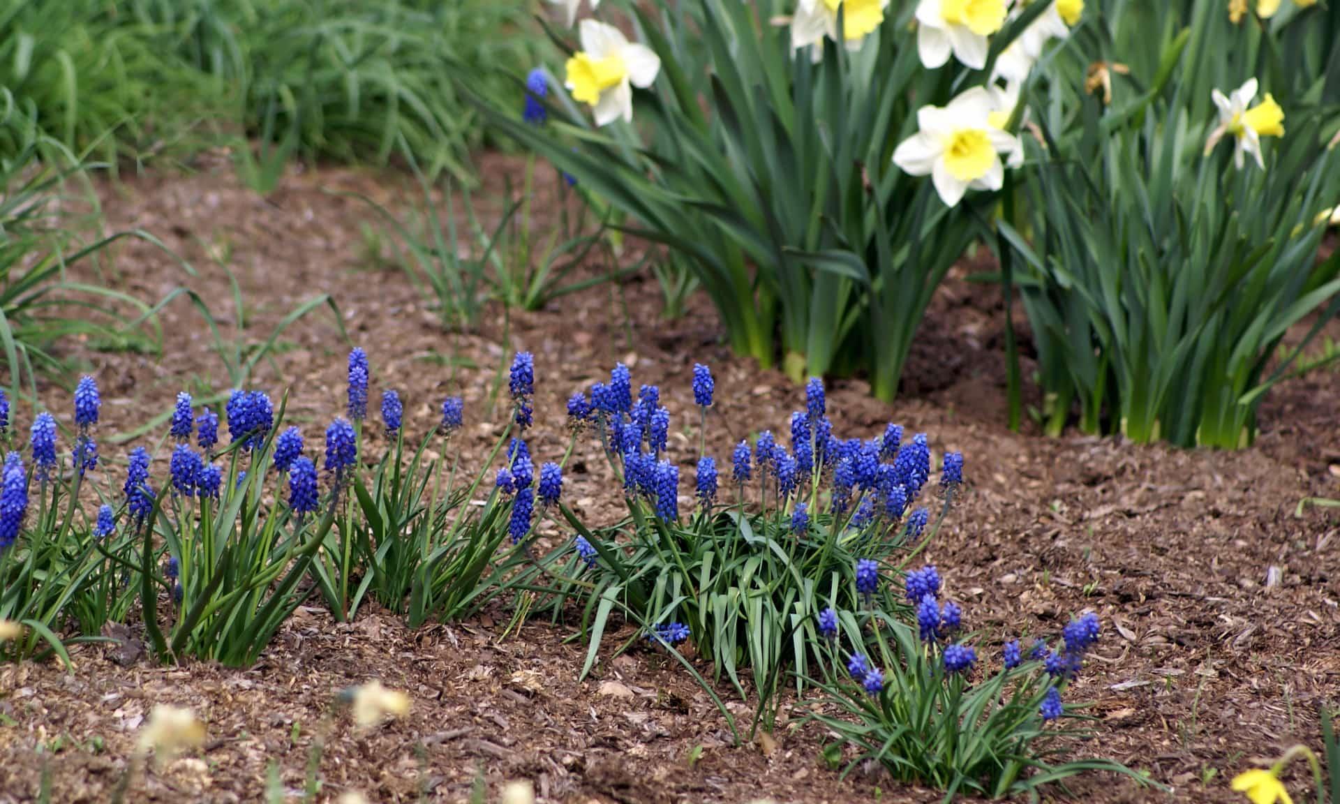 Апрельские работы цветовода