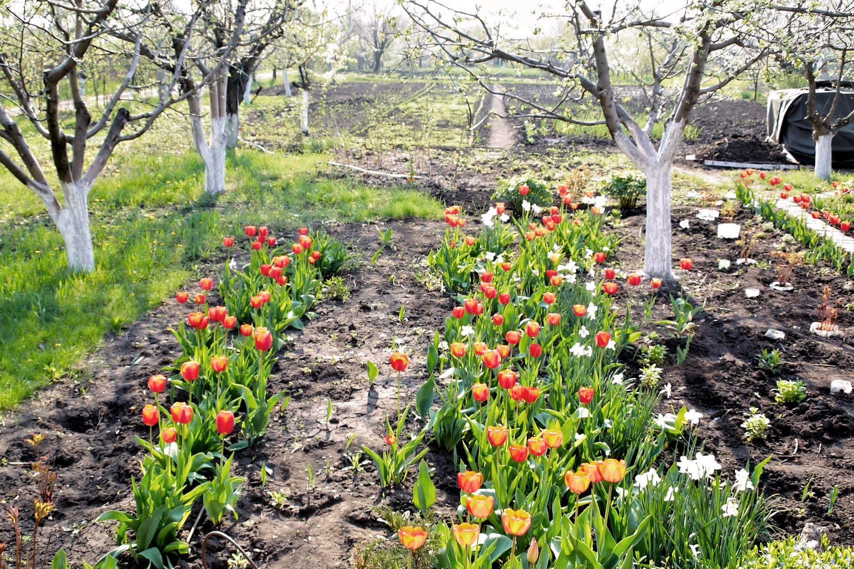 Работы садовода в апреле