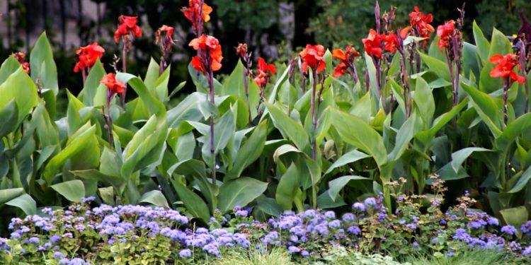 В цветнике в июне