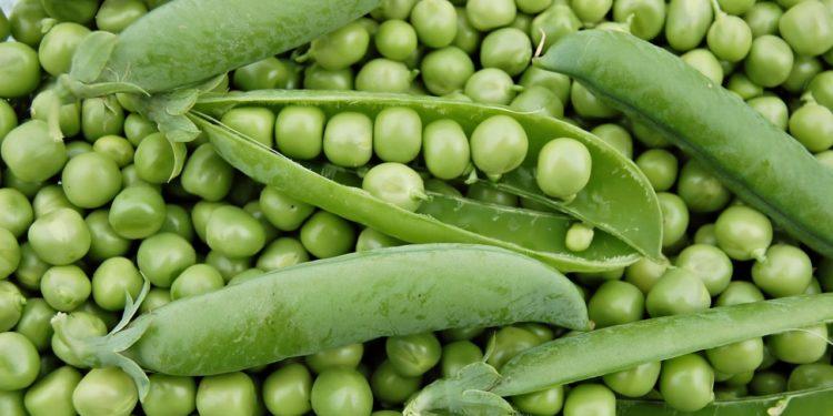 Зеленый горошек - выращивание