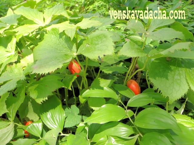 Голодание растений