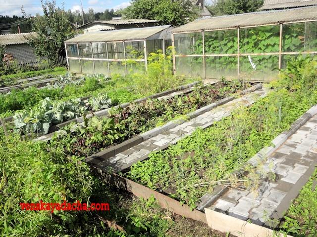 Уход за огородом в жаркую погоду