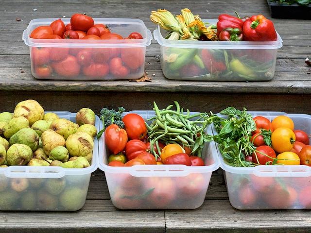 Заморозка фруктов, ягод, овощей