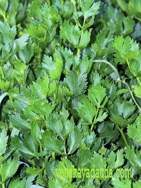 Способы заморозки зелени и пряностей