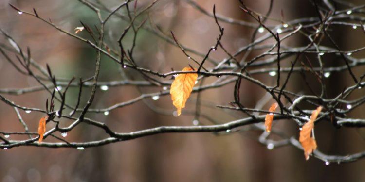 Деревья в ноябре